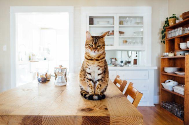 Restauracja z kotami a wymagania sanepidu